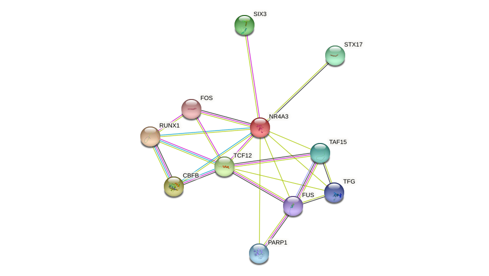 NR4A3 protein (human) - STRING interaction network