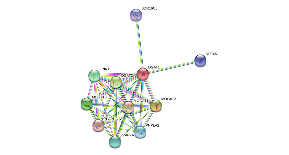 DGAT1 protein (human) - STRING interaction network