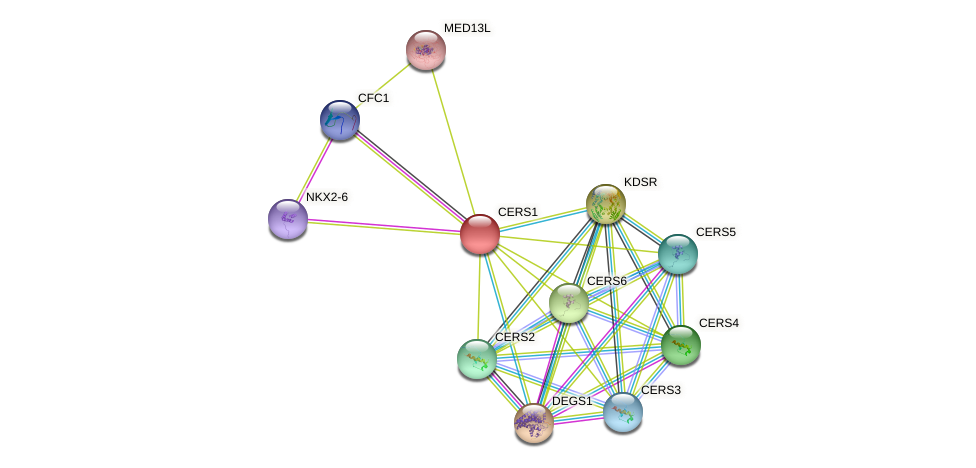 CERS1 protein (human) - STRING interaction network