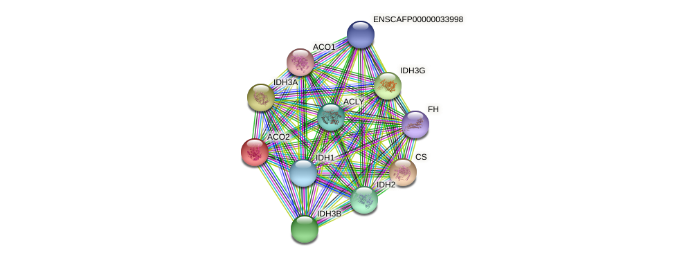 ACO2 protein (Canis lupus) - STRING interaction network