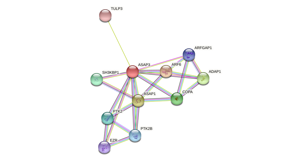 ASAP3 protein (Canis lupus) - STRING interaction network