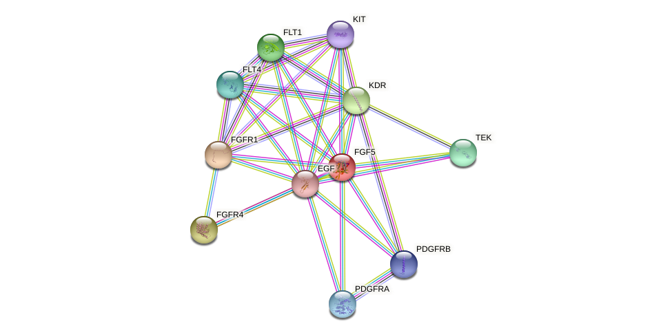 FGF5 protein (Canis lupus) - STRING interaction network