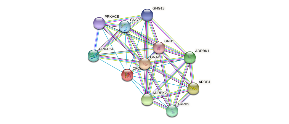 CFOLF1 protein (Canis lupus) - STRING interaction network
