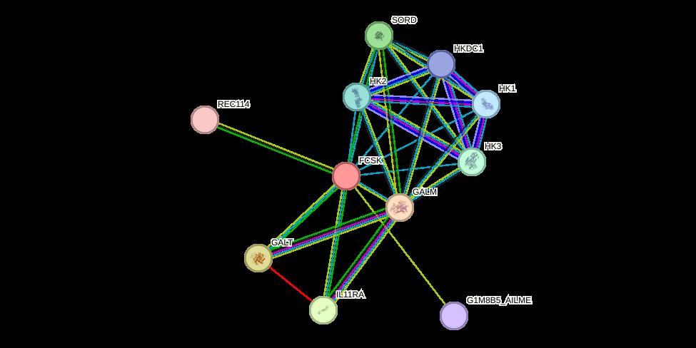 FUK protein (Ailuropoda melanoleuca) - STRING interaction