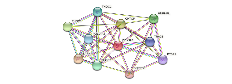 DDX39B protein (Sus scrofa) - STRING interaction network