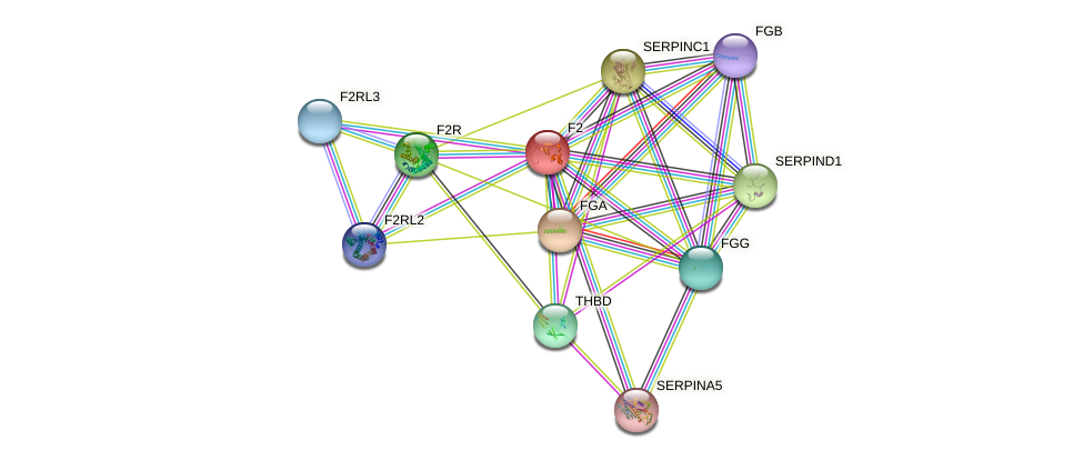 F2 protein (Bos taurus) - STRING interaction network