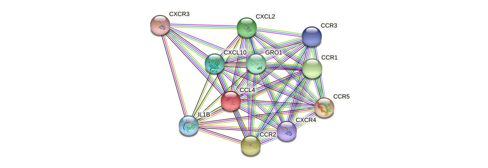 CCL4 protein (Bos taurus) - STRING interaction network