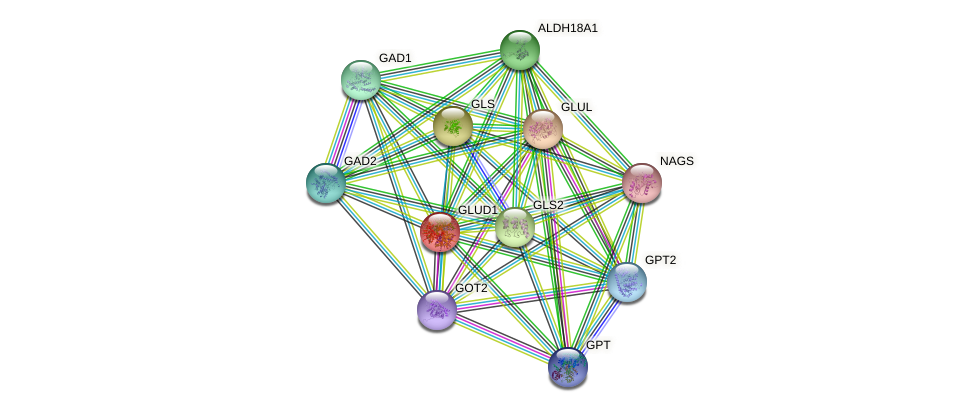 GLUD1 protein (Bos taurus) - STRING interaction network