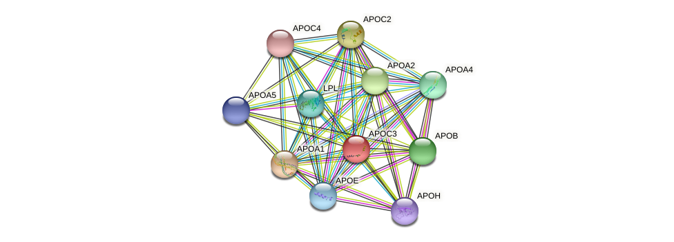 APOC3 protein (Bos taurus) - STRING interaction network