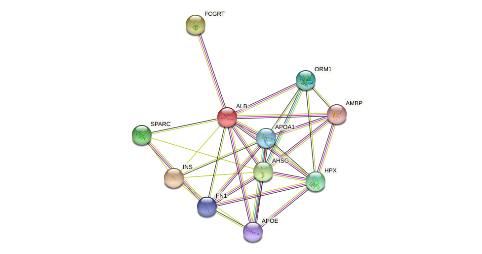 ALB protein (Bos taurus) - STRING interaction network