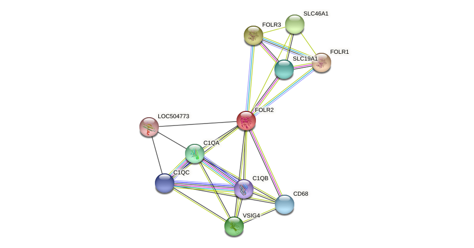 FOLR2 protein (Bos taurus) - STRING interaction network