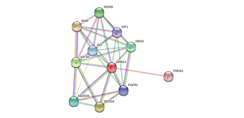 GRB14 protein (Bos taurus) - STRING interaction network