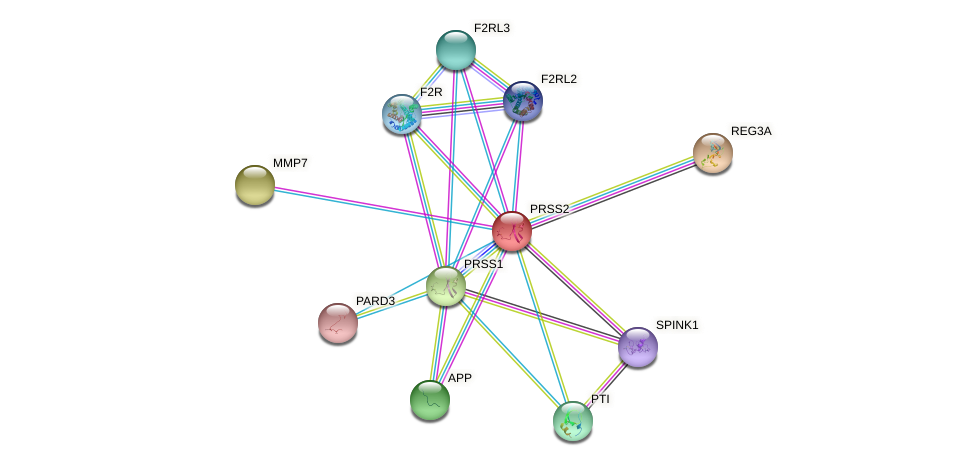 PRSS2 protein (Bos taurus) - STRING interaction network